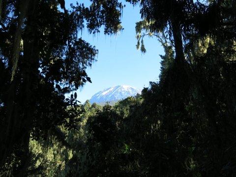 Gipfelblick vom Regenwald