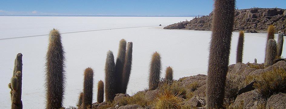 _AMS_IWI_Insel_Incahuasi_Salar_de_Uyuni_Salzwueste_Bolivien