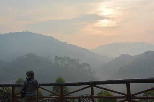Aussicht auf Regenwaldhügel