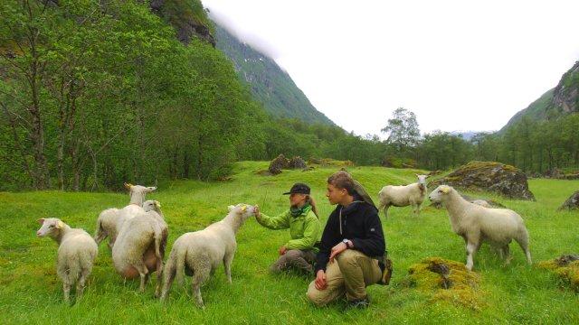 Kinder mit Schafherde_2