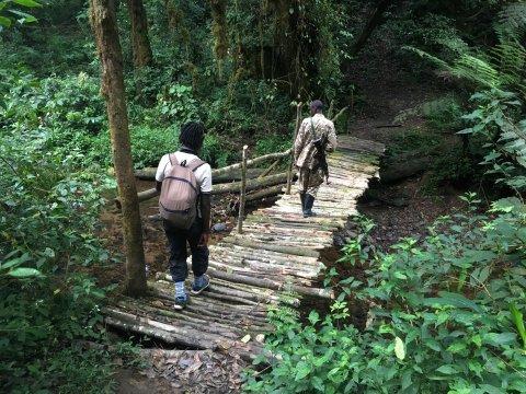 Uganda-Bwindi-Forest-Durchquerung-Guide-über-Brücke