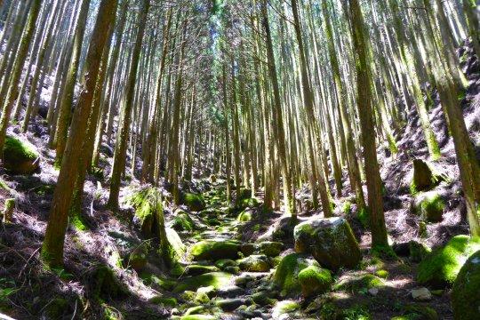 Kumano-Kodo-Pilgerweg
