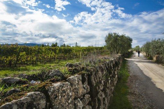 Wanderweg-nach-Monteriggioni