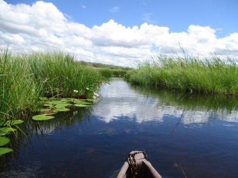 Botswana-Mokoroaussicht-im-Okavango-Delta