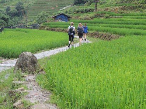 Sapa_Wanderung_durch-Reisfelder