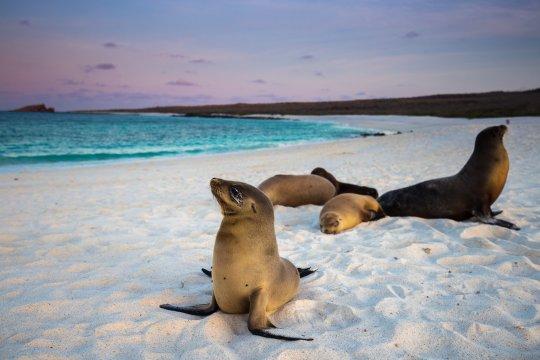 Ecuador - Robben auf Galápagos