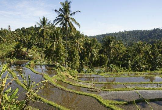 Bali Reisterrassen bei Munduk