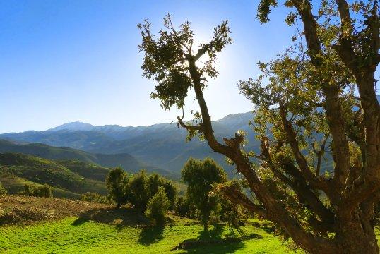 Mgoun fruchtbares Tal