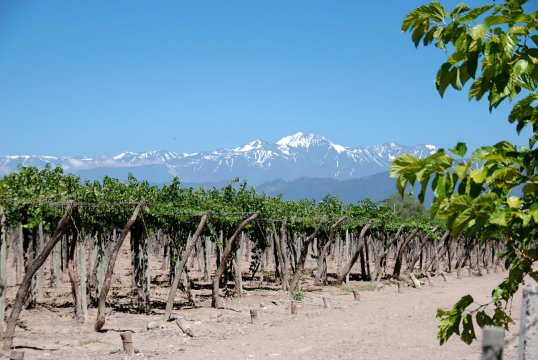 Weingut mit Blick auf Anden