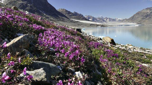 Groenland Karalefjord Gletscher_2