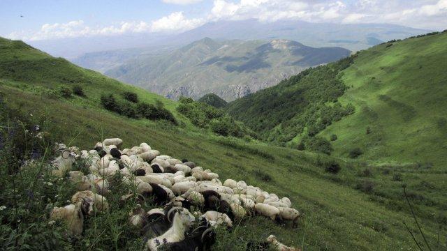 Hirten Armenien