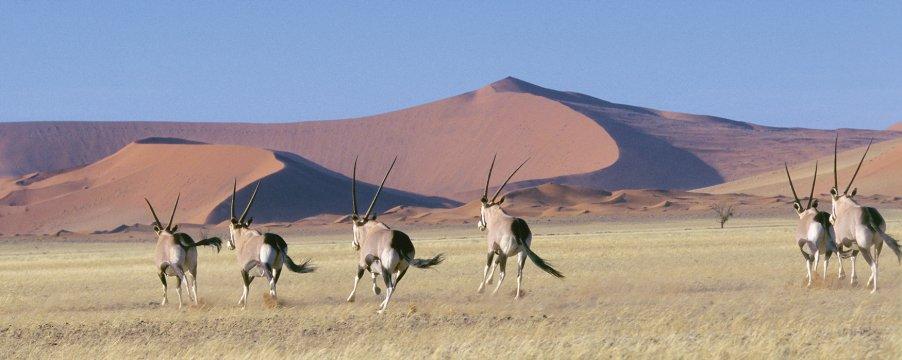 AF_BSK_Namibia_Sossusvlei_00006773