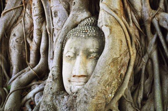 Thailands beruehmtestes Gesicht in Ayutthaya