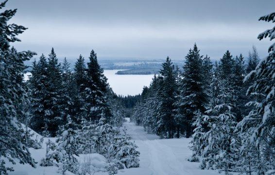 Winterlandschaft beim Hundecamp