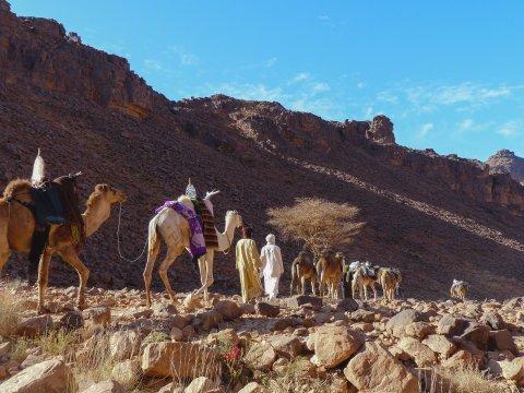 Mit Tuareg-Nomaden und ihren Kamelen unterwegs