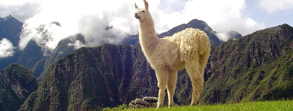_AMS_IWI_Lama_Machu_Picchu
