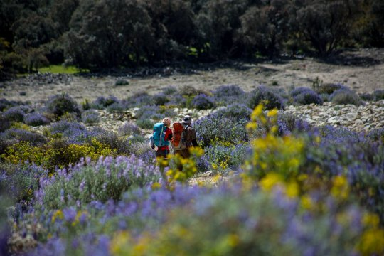 Peru Trekking zwischen Blumen