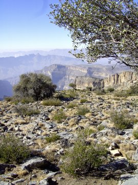 Jebel_ShamsJebel Shams_2