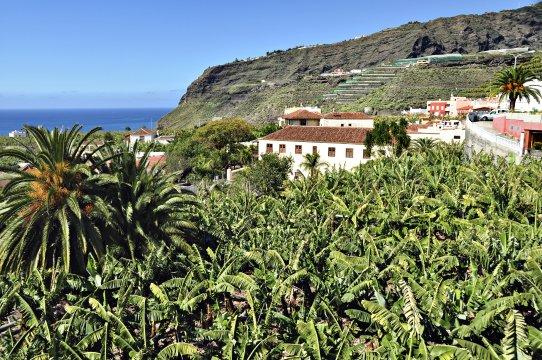 Bananenfeld auf La Palma