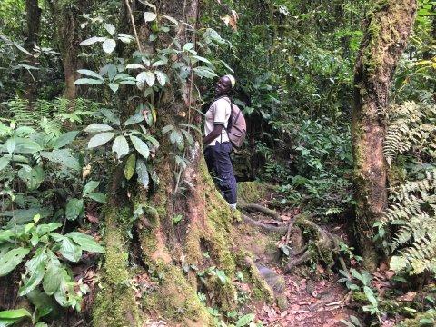 Uganda-Bwindi-Forest-Durchquerung-Guide