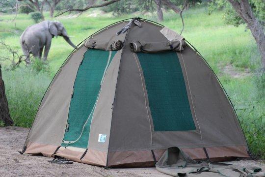 Botswana-Zeltplatzbesucher-Cobe-Nationalpark