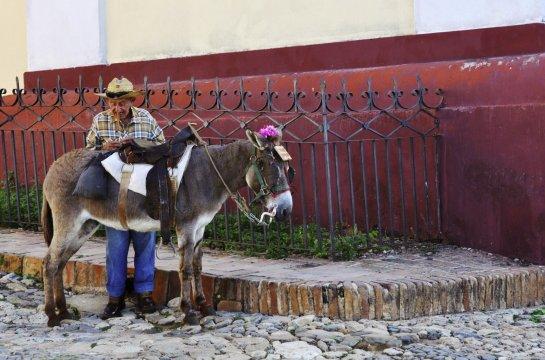 Kubanisches Transportmittel der Esel_2