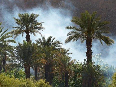 Palmenoase von Djanet