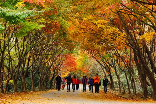 Südkorea Gyeongju Park Herbstlaub