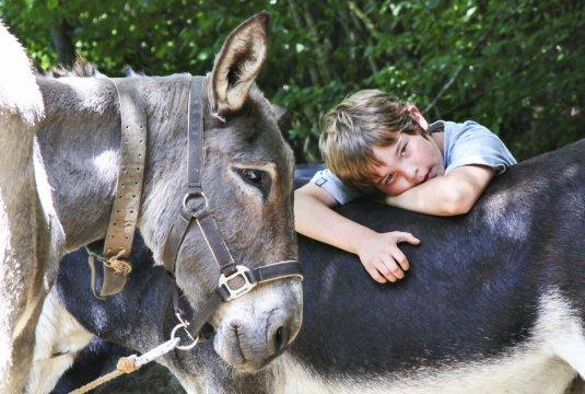 Pyrenaeen Schmuseeinheit mit Esel