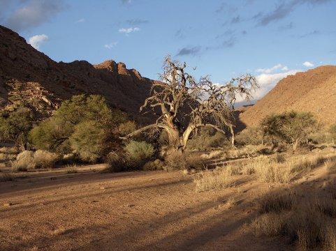 Trockenfluss in den Tirasbergen