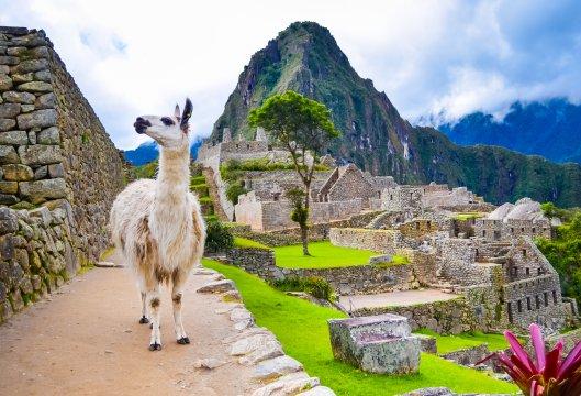 Peru - Lama in Machu Picchu