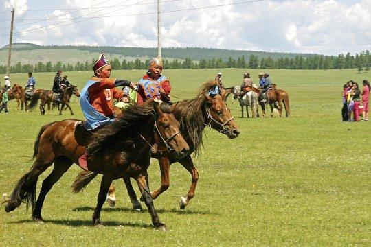 Wilde Verfolgungsjagd während des Naadam-Festes