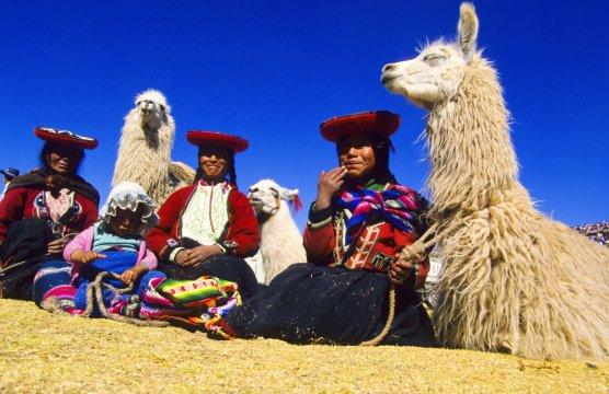 Cuzco Lamas