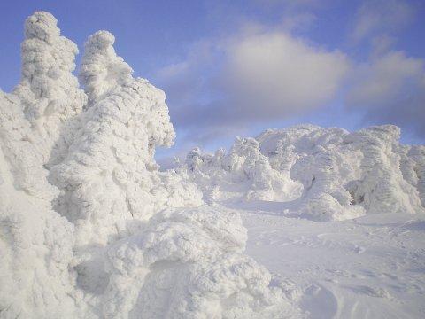 Schneeschuhgehen Baerischer Wald Eisbaeume 2