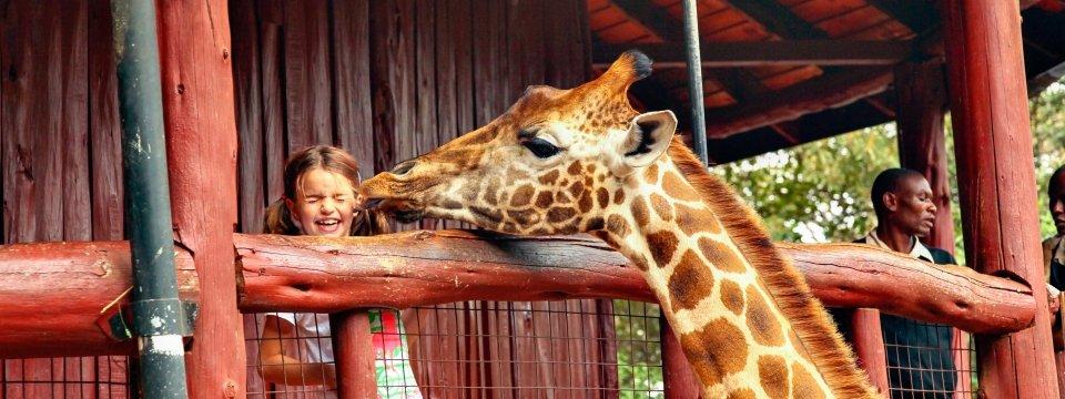 AF_XK_Giraffe_Center_Auge_in_Auge