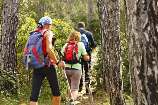 Wandern durch den Pinienwald_2