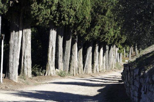Zypressen Toskana