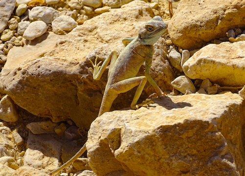 Israel-Negev-Wadi-Raham-Canyon-Chehoret-Echse