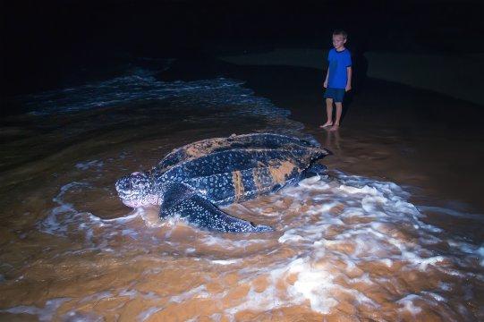 Kind mit Schildkröte