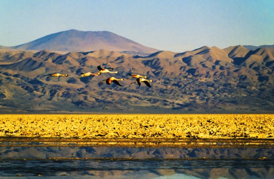 Salzsee San Pedro de Atacama 2