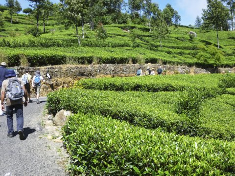 Wanderung Teeplantage_2