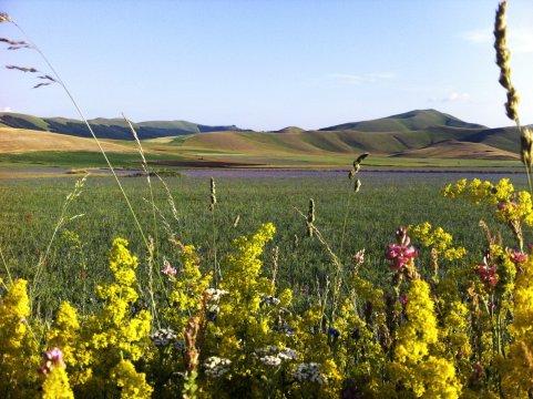 Blühende Landschaft bei Castelluccio