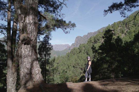 Kiefernwald auf den Kanaren