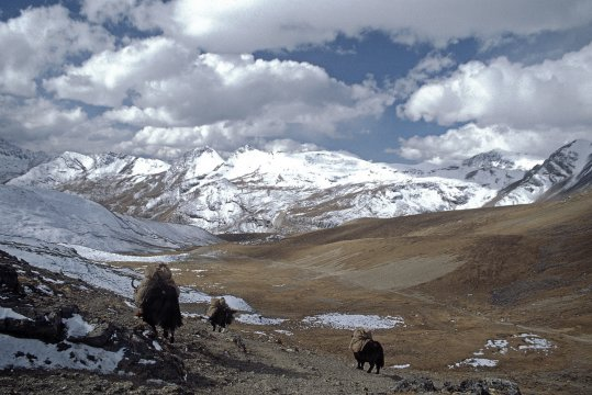 Abstieg vom Yale La Bhutan