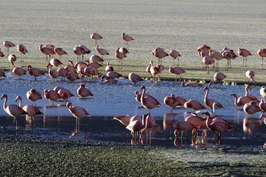 Flamingos in der SalzwuesteFlamingos Salzwueste 2