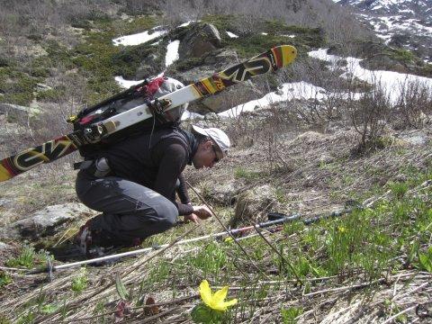 Kaukasus Skitragen bis Schneegrenze