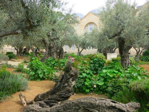Israel-Jerusalem-Getsemane-Garten