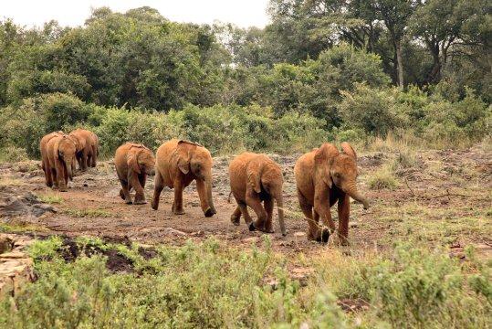 Daphne Sheldrick Elefantenparade_2