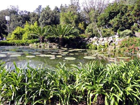 Ischia Botanischer Garten La Mortella_2