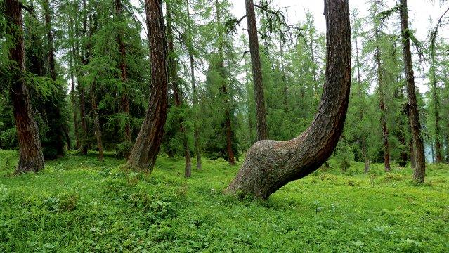 Österreich-Dachstein-Wald